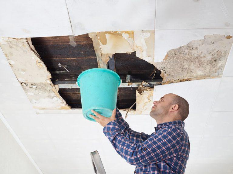 Danger of Mold in House